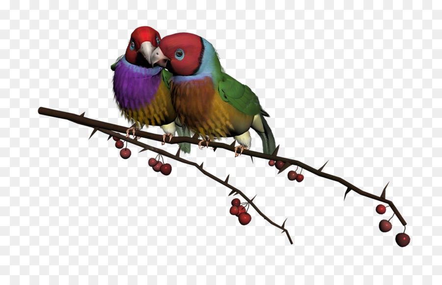 Birds good morning clipart freeuse stock Good Morning png download - 800*566 - Free Transparent Bird png ... freeuse stock