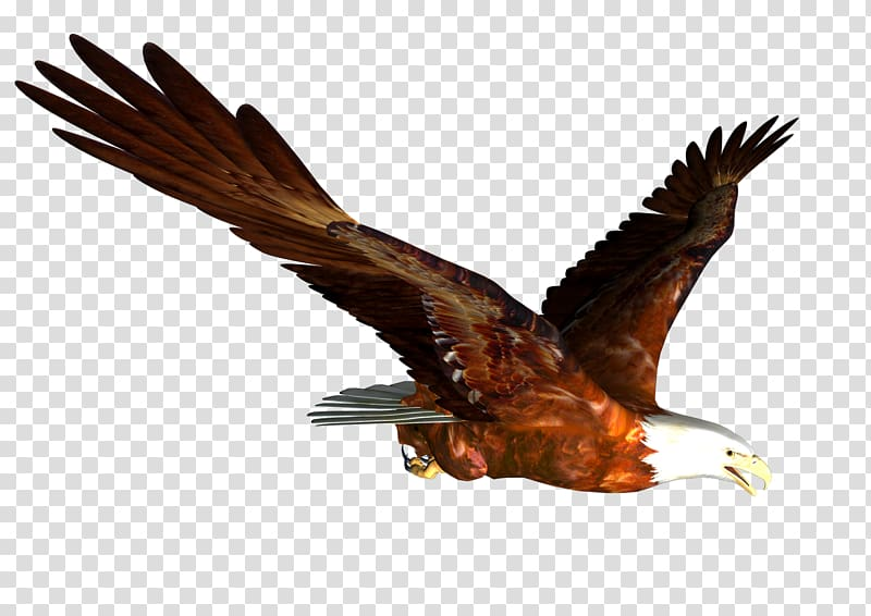 Birds of prey free clipart clip transparent stock Hawk Mountain Sanctuary Accipitrinae Falconiformes Bird of prey ... clip transparent stock