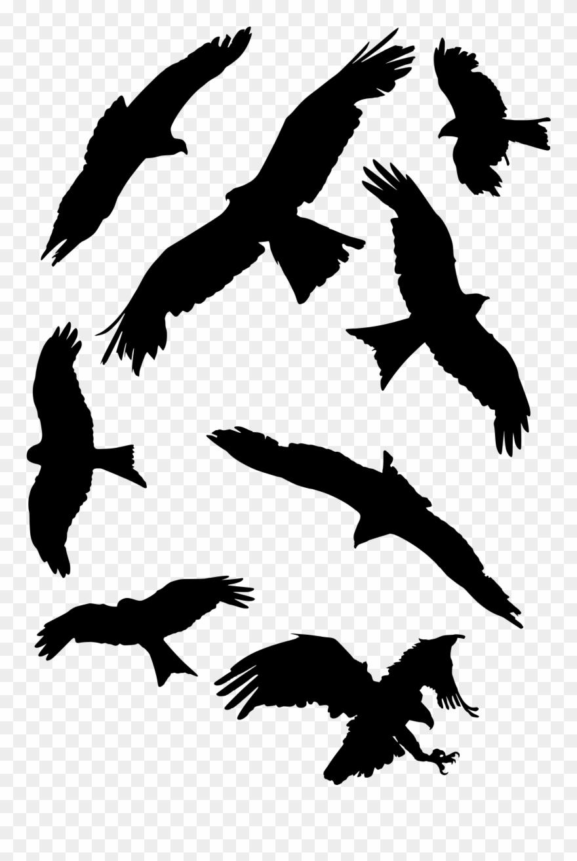 Birds of prey free clipart clip library Bird Set Free Falcon Bird Of Prey Beak - Falcon Clipart (#470279 ... clip library