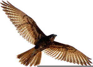 Birds of prey free clipart jpg free stock Birds Of Prey Clipart Black And White   Free Images at Clker.com ... jpg free stock
