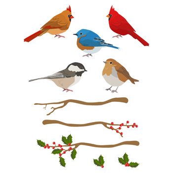 Realistic bird clipart side svg freeuse stock Winter Birds Clipart, Christmas Clipart, Winter Clipart, Holiday Clipart svg freeuse stock