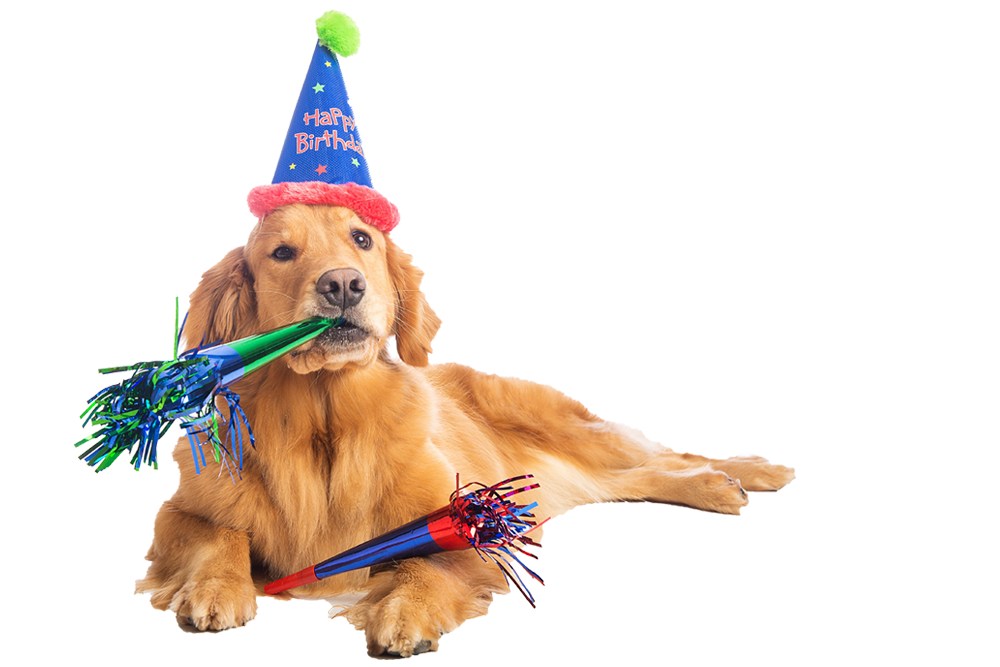 Png transparent images pluspng. Dog birthday clipart