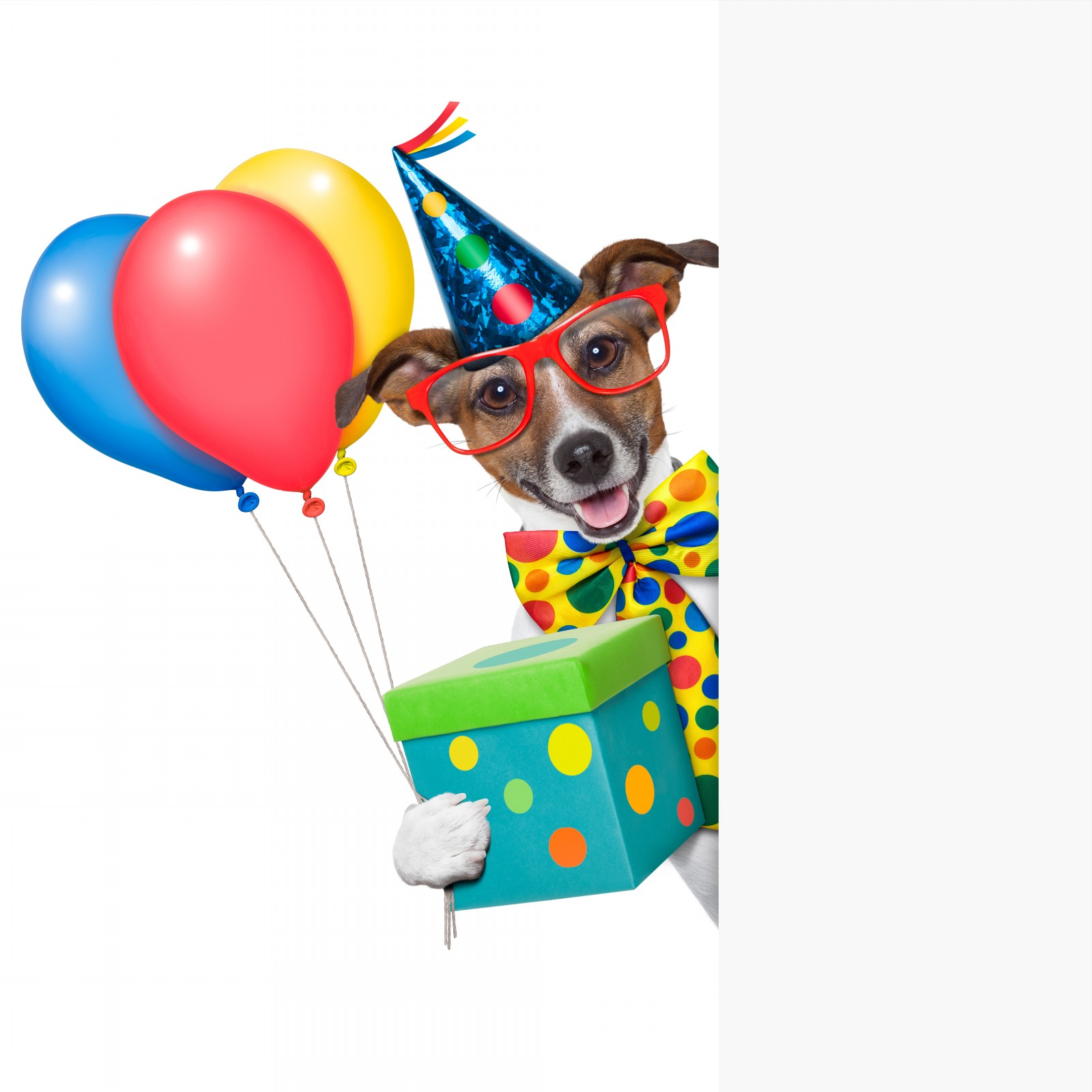 Birthday with dog clipart jpg library Dog Birthday Clipart - Clip Art Library jpg library