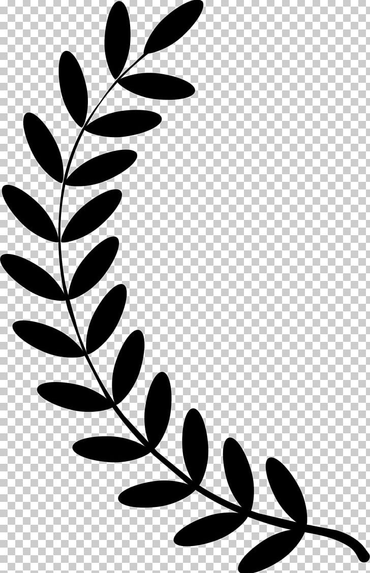 Black and white band plant clipart png image freeuse stock Olive Branch Laurel Wreath PNG, Clipart, Bay Laurel, Black, Black ... image freeuse stock