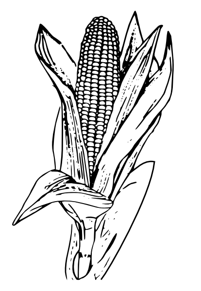 Black and white band plant clipart png png royalty free stock Download Corn Black And White Images Free Download Clipart PNG Free ... png royalty free stock