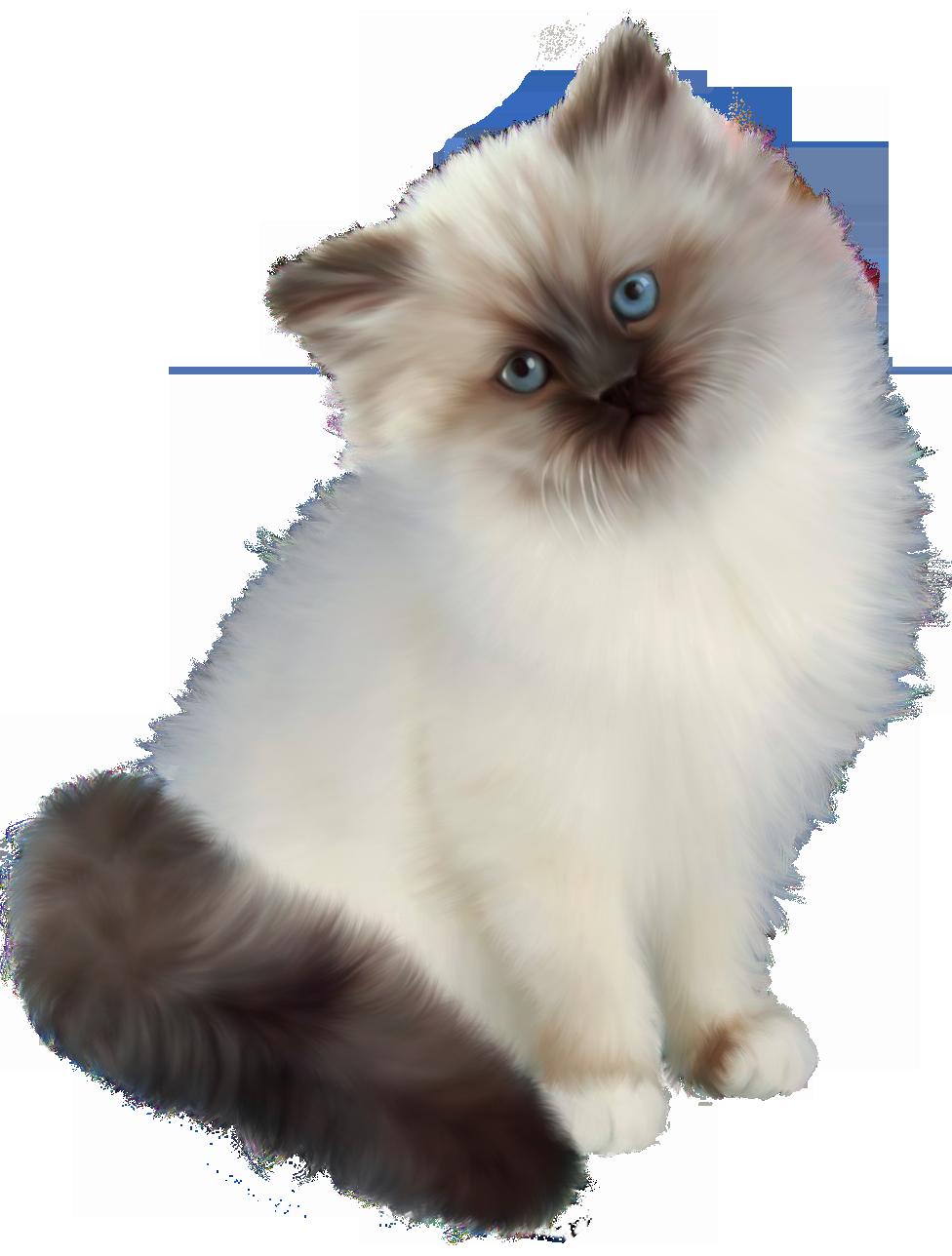 Black and white birman cat vector clipart library Kitten Transparent PNG Clipart | leuke dieren plaatjes | Pinterest ... library