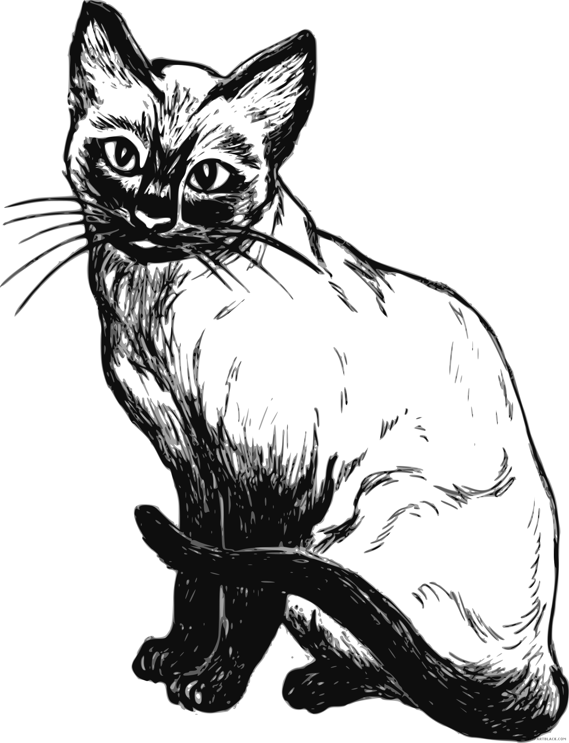 Siamese Cat Clipart - ClipartBlack.com png royalty free library
