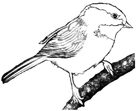 Black and white chickadee clipart png black and white Collection of Chickadee clipart | Free download best Chickadee ... png black and white