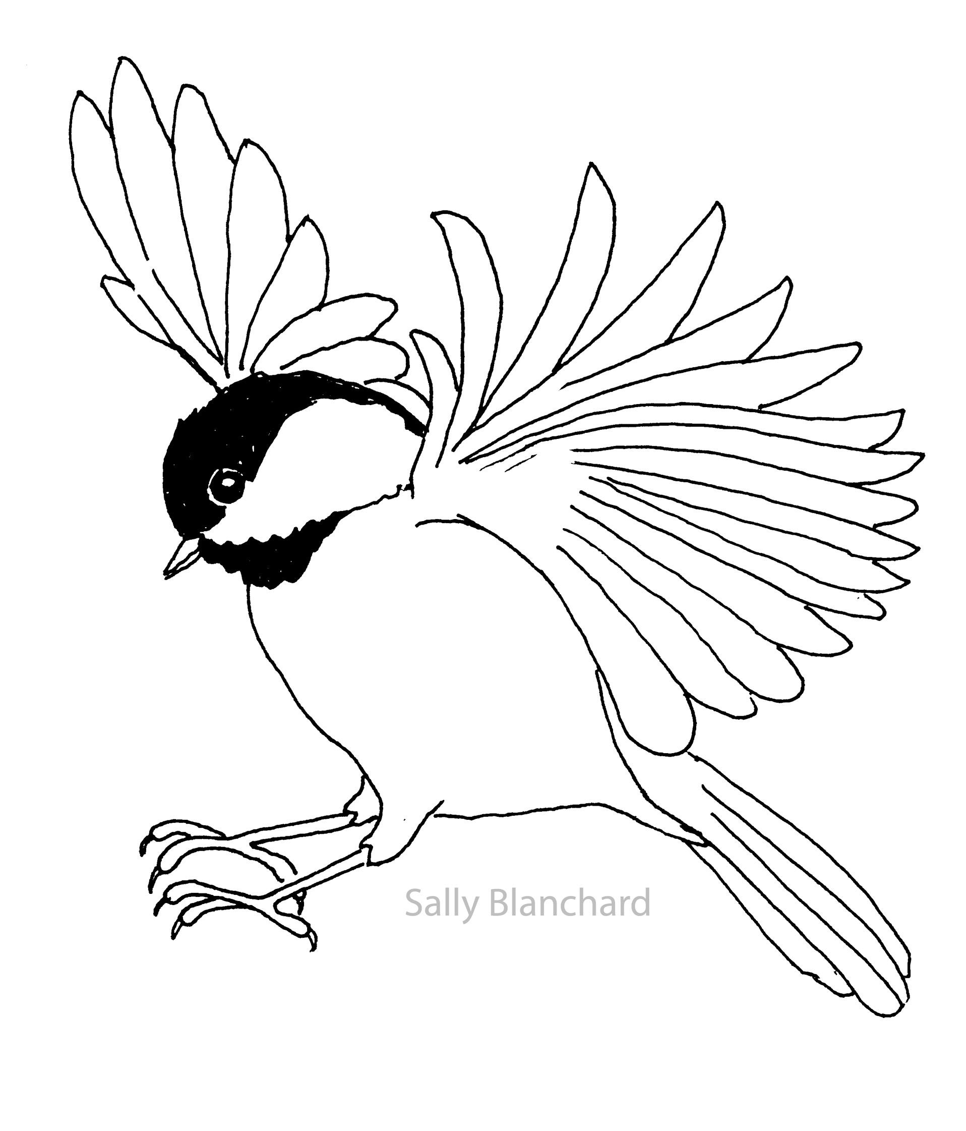 Black and white chickadee clipart vector free library Sally Blanchard - Pen Line Drawing Landing Black-capped Chickadee ... vector free library