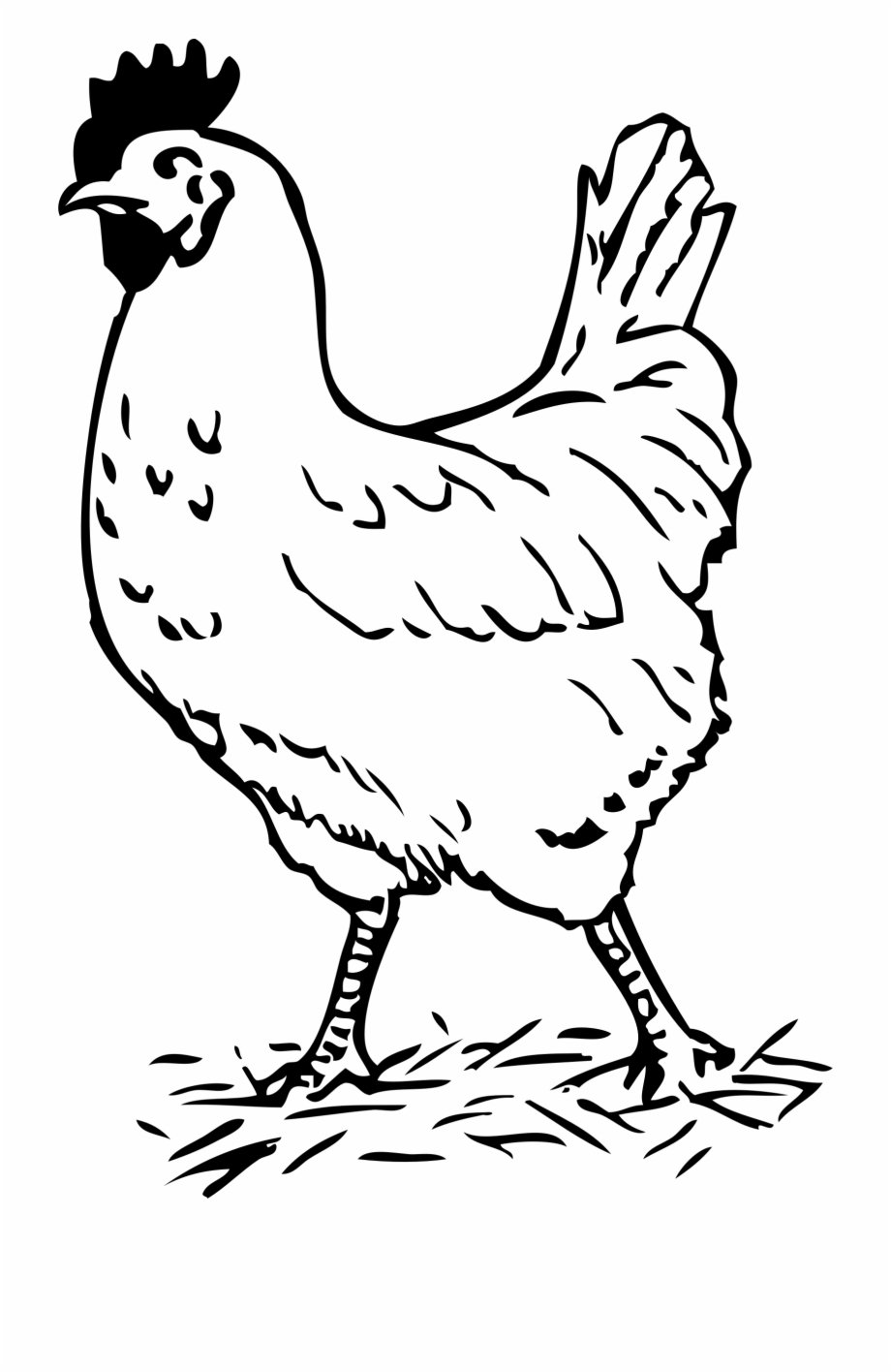 Free chicken clipart black and white pictures clip art Clipart Black And White Chicken - Hen Black And White Free PNG ... clip art