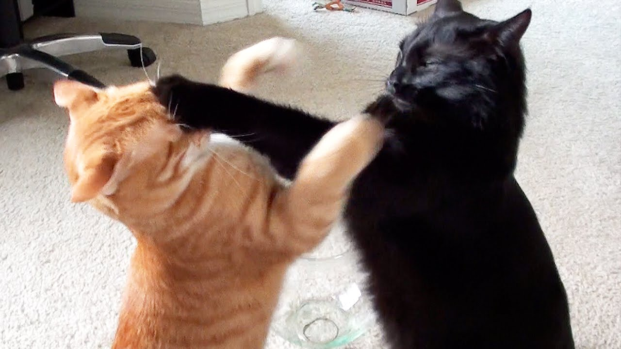 Black and white clipart cat and dog fighting