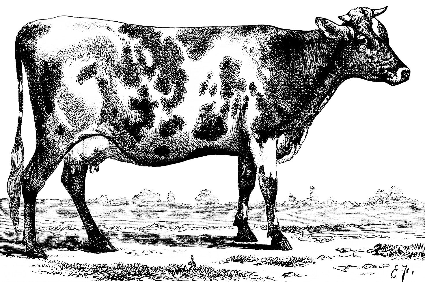 Black and white clipart cow with no legs clip library download vintage black cow clipart | black and white clipart cow, vintage cow ... clip library download