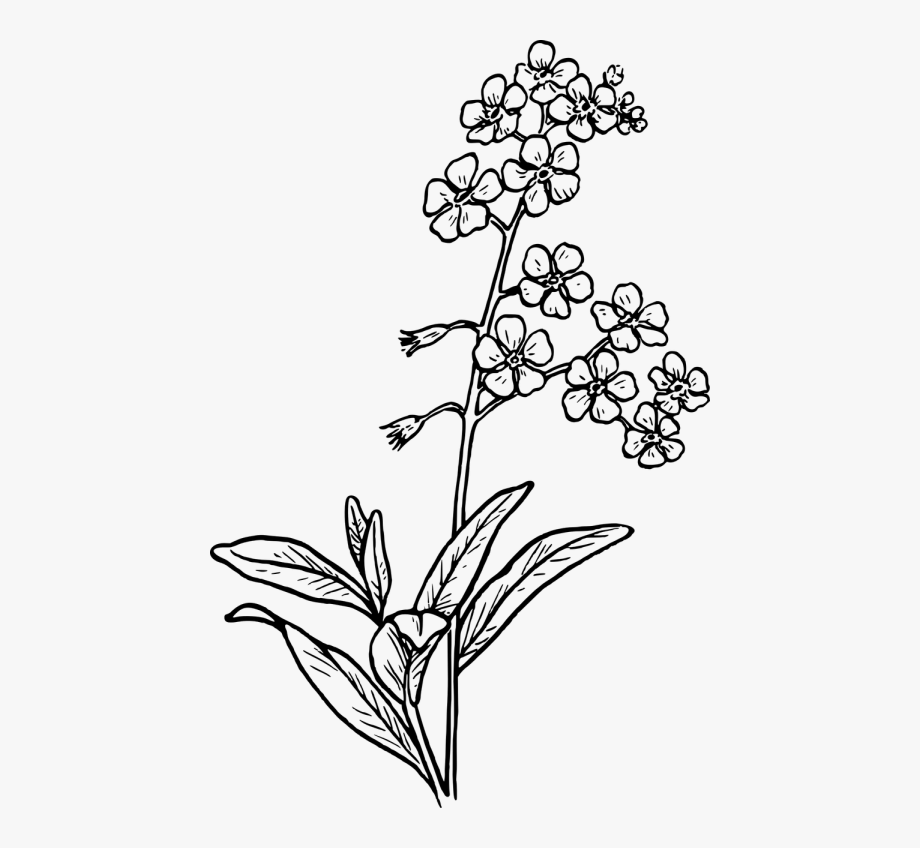 Row of flowers black and white clipart transparent library Grass,free Vector Graphics - Forget Me Not Clipart Black And White ... transparent library