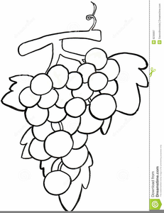 Black and white clipart grapes clip art freeuse Grape Clipart Black And White | Free Images at Clker.com - vector ... clip art freeuse