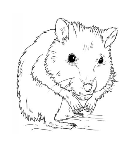 Black hamster clipart clipart library library Hamster clipart black and white » Clipart Portal clipart library library