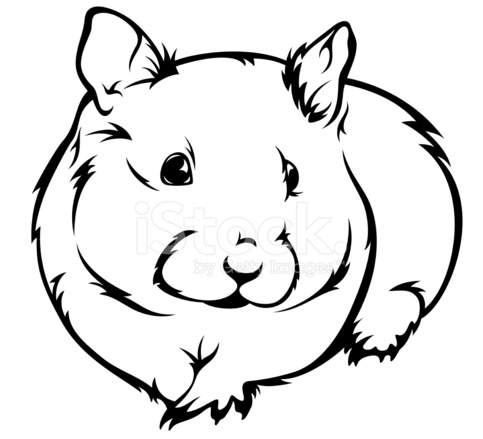 Hamster Stock Vector - FreeImages.com image freeuse stock
