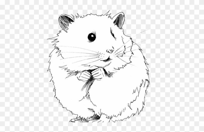 Black hamster clipart svg transparent library Drawn Hamster Gerbil - Hamster Black And White Clipart, HD Png ... svg transparent library