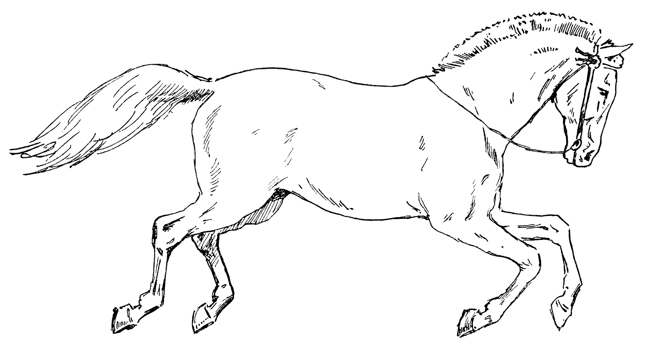 Running horse clipart black and white