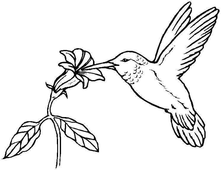 Drawings Of Hummingbirds And Flowers at PaintingValley.com | Explore ... jpg black and white library