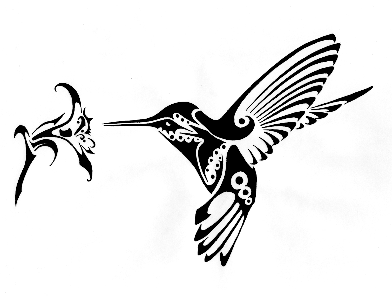 Hummingbird Drawings Free | Free download best Hummingbird Drawings ... image royalty free library