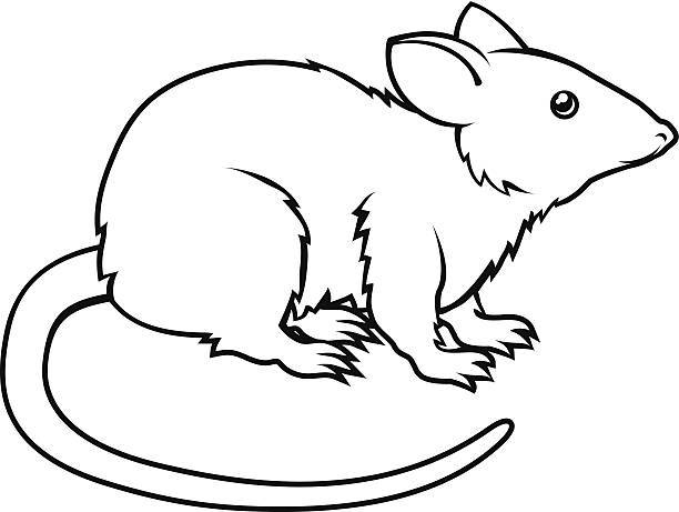 Black and white clipart image of rat banner Rat clipart black and white 5 » Clipart Portal banner