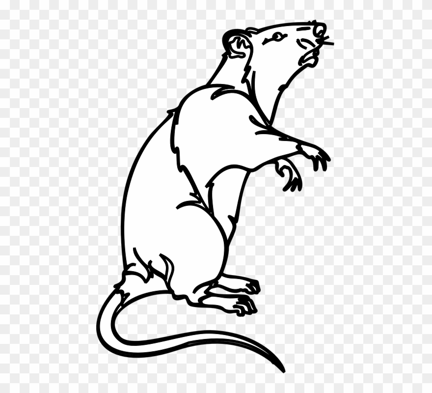 Black and white clipart image of rat banner freeuse Collection Of White Mouse Cliparts - Rat Clip Art Black White - Png ... banner freeuse