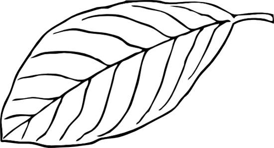 Black and white clipart leaf picture freeuse download 38+ Black And White Leaf Clip Art | ClipartLook picture freeuse download