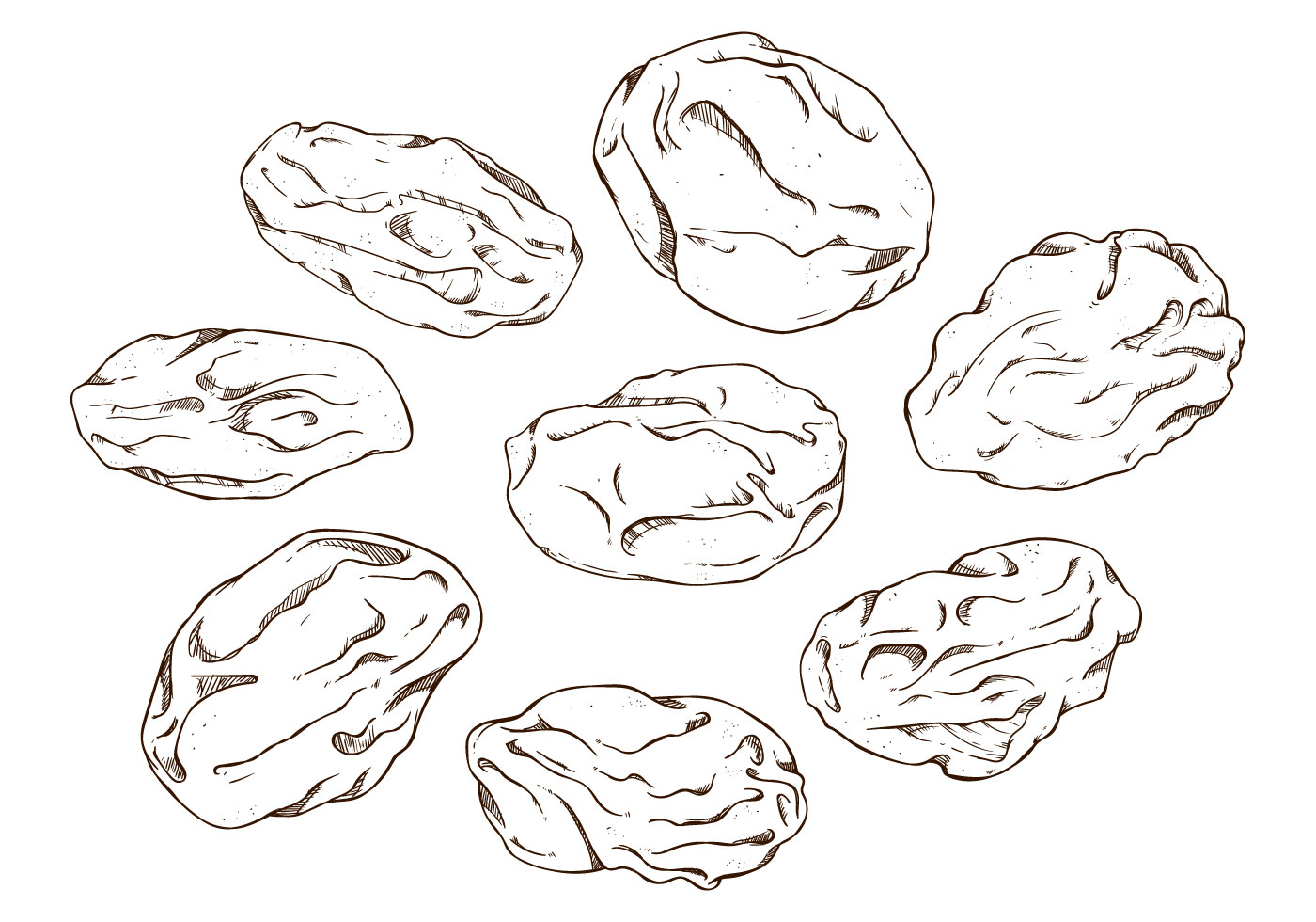Raisin clipart black and white clip art black and white download Raisin Drawing at PaintingValley.com | Explore collection of Raisin ... clip art black and white download
