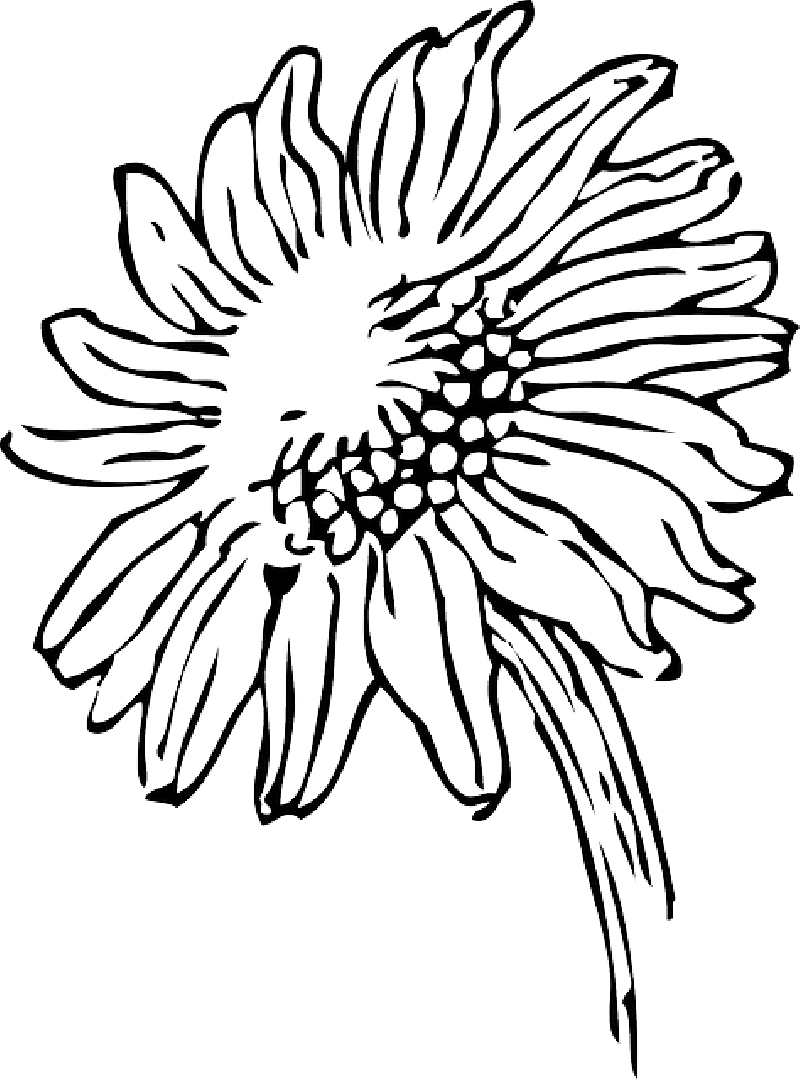 Child sun drawing clipart black and white clip transparent library Sun Drawing Black And White at GetDrawings.com | Free for personal ... clip transparent library