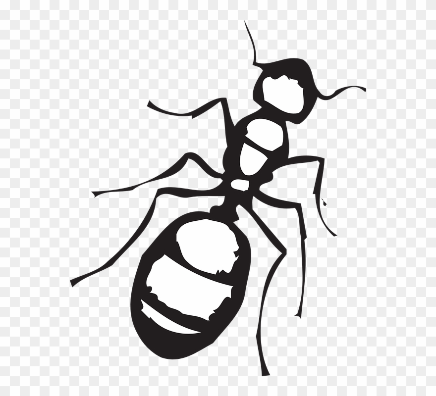 Black and white clipart of an ant image black and white Legs Clipart Ant - Ant Clip Art Black And White - Png Download ... image black and white