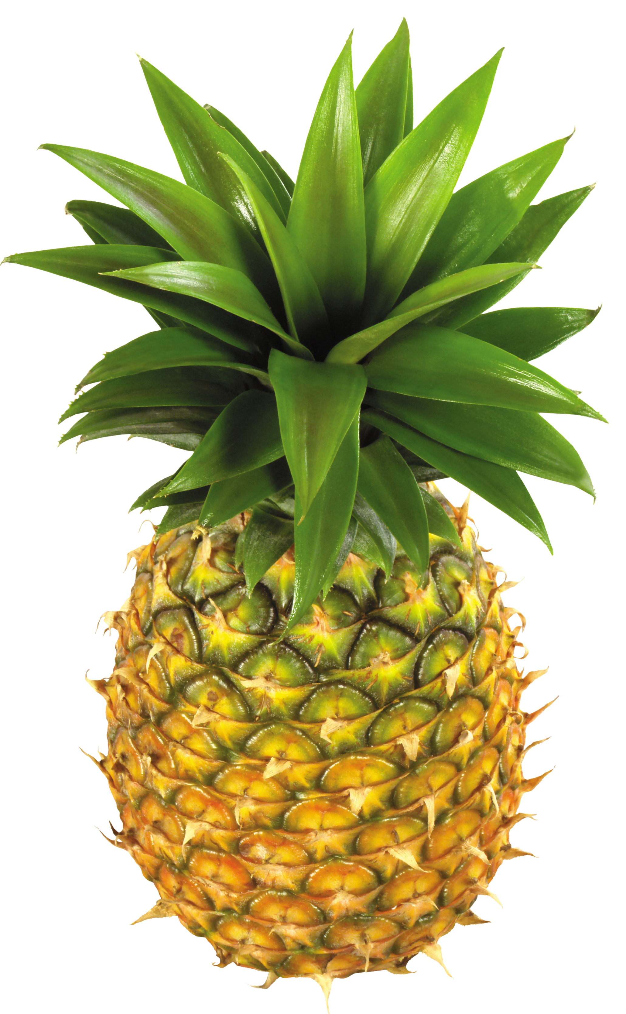 Pineapple flower clipart picture black and white download pineapple clip art free clipart images pineapple 2 | Hospsitality ... picture black and white download