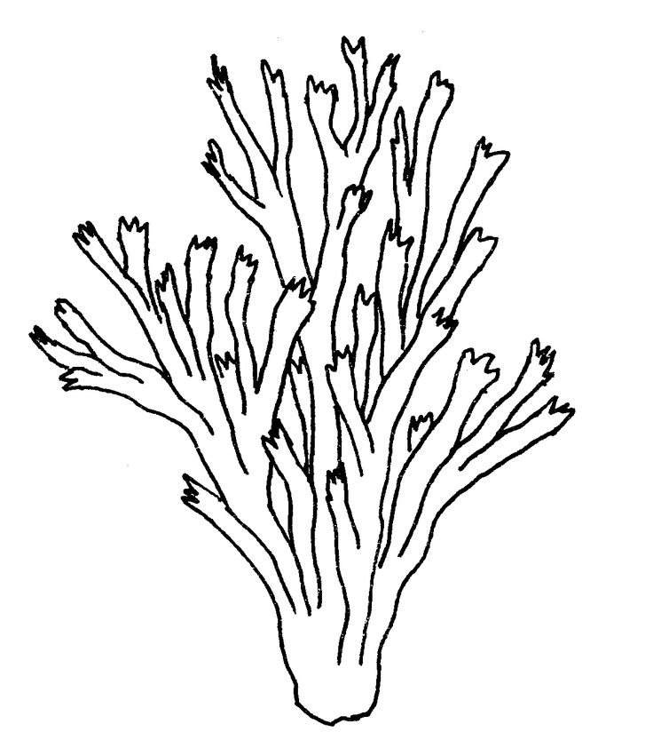 Black and white clipart of staghorn coral