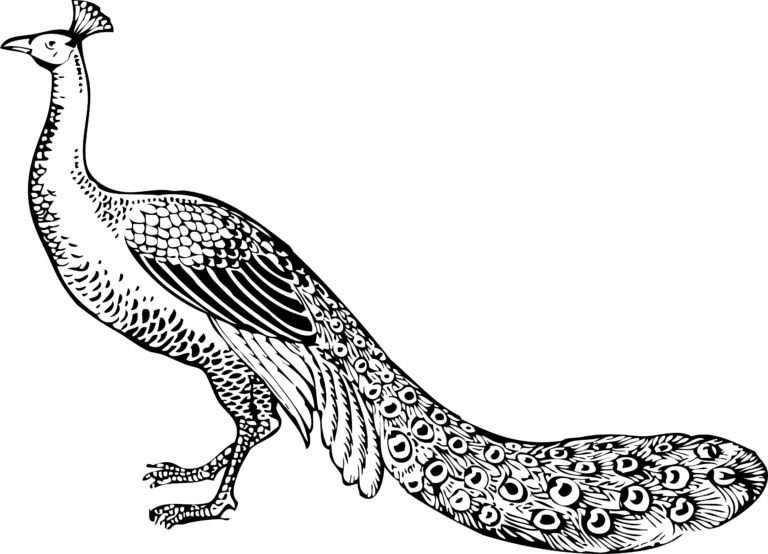 Black and white clipart peacock freeuse ➡ Peacock Clip Art Black And White 2019   Images in 2019   Peacock ... freeuse