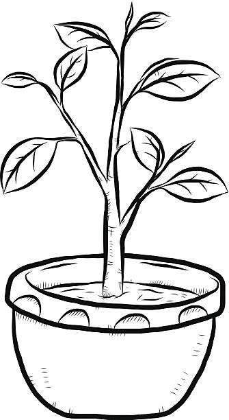Plant black and white clipart picture transparent library Plant Clipart Black And White | Free download best Plant Clipart ... picture transparent library