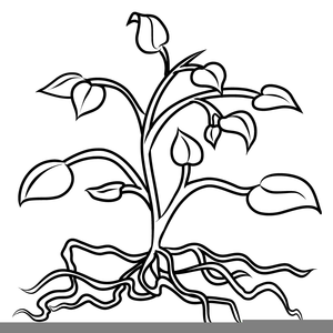 Plant black and white clipart black and white library Plants Black And White Clipart | Free Images at Clker.com - vector ... black and white library