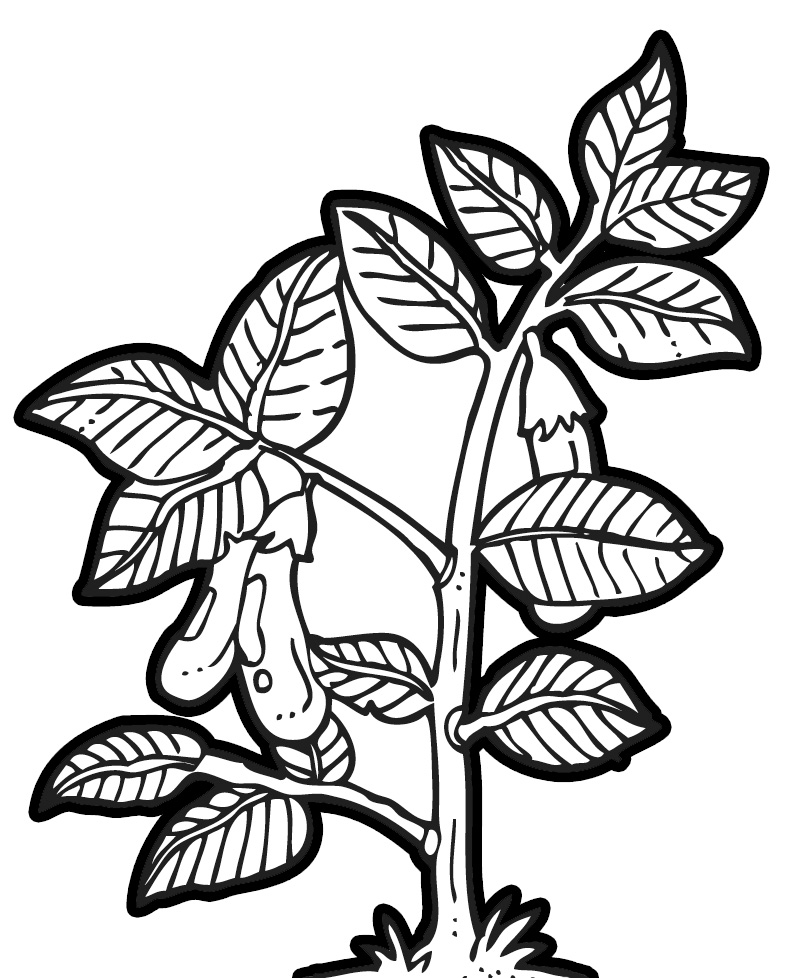 Plant black and white clipart png freeuse library Free Black And White Plants, Download Free Clip Art, Free Clip Art ... png freeuse library