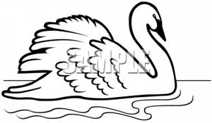 Black and white clipart swan graphic black and white download Swimming Swan In Black and White - Royalty Free Clipart Picture graphic black and white download