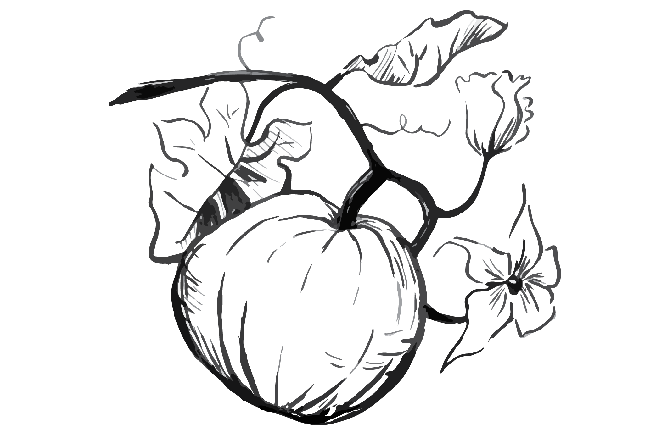 Pumpkin vine black and white clipart graphic royalty free download Pumpkin Seed Drawing at GetDrawings.com | Free for personal use ... graphic royalty free download