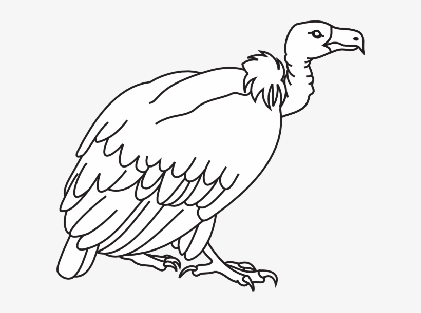 Free black and white clipart of a vulture. Png