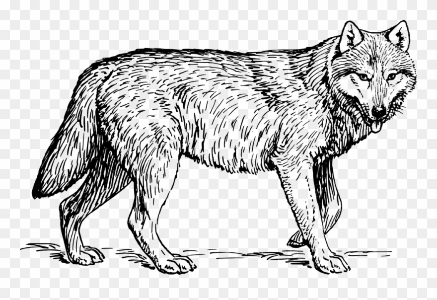 Wolf clipart black and white image free stock Animal - Wolf - Gray Wolf Black And White Clipart (#524134) - PinClipart image free stock