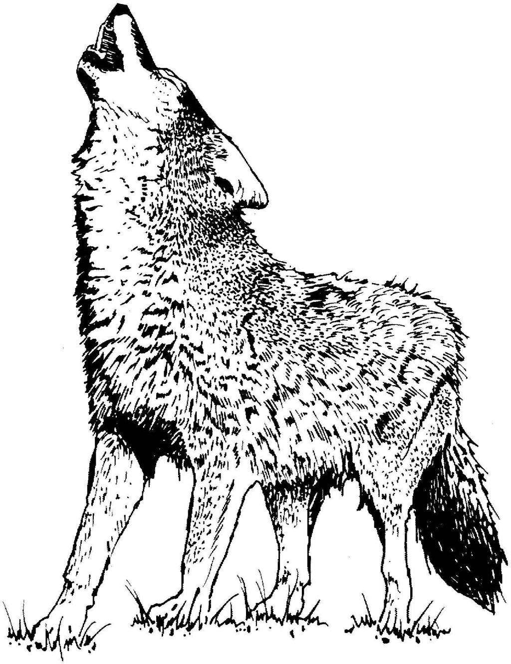 Black and white clipart wolf clip transparent library Wolf Clipart Tigersit Black and White - Clipart1001 - Free Cliparts clip transparent library