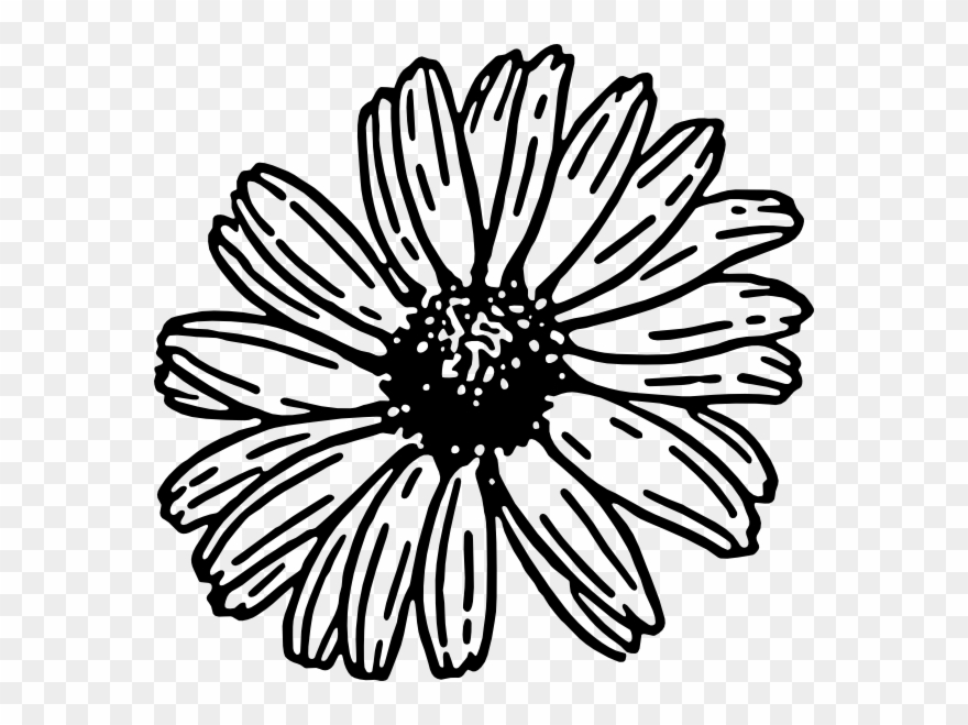 Daisies clipart black and white vector library stock Black And White Daisy Clipart - Png Download (#440458) - PinClipart vector library stock