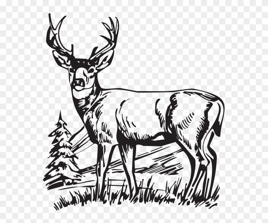 Black and white deer clipart png Download Hunting Deer Drawings Clipart White-tailed - Deer Scenes ... png