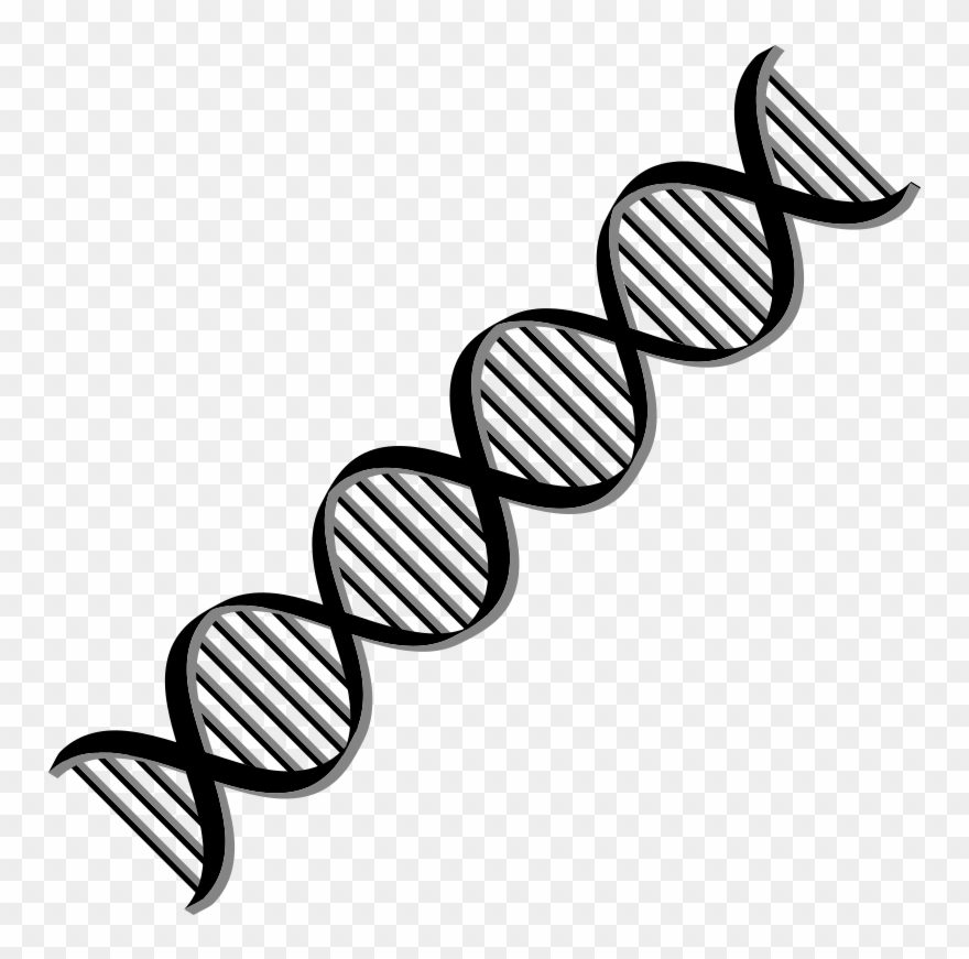 Transparent Black And White Dna Clipart - Dna Helix Black And White ... graphic transparent