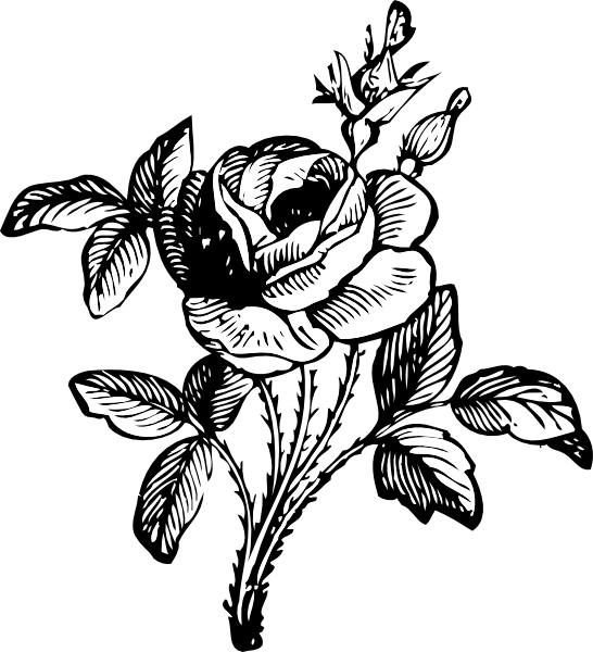 Black and white flower banner clipart graphic black and white library tatoo art rose | Rose tattoo design by Alyx Wilson | Society6 | hand ... graphic black and white library