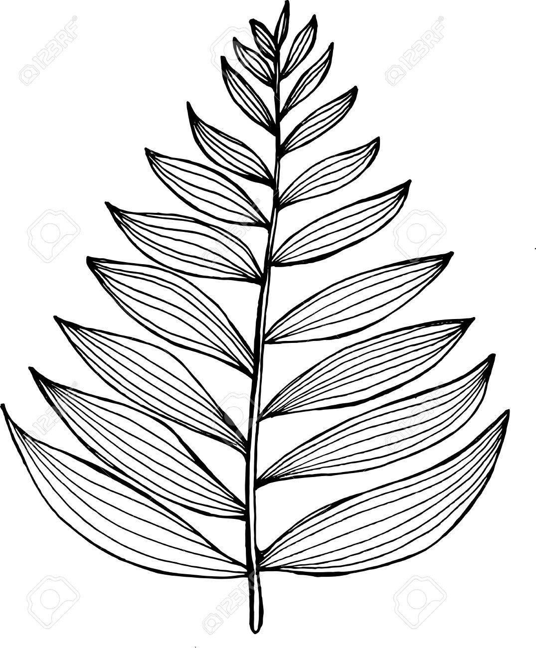 Black and white fractal clipart svg transparent stock Black and white picture of a fractal leaf. Branch of a fern ... svg transparent stock
