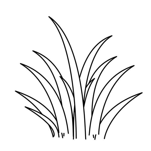 Picture of grass clipart black and white