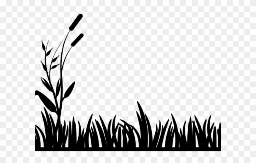 Swamp black and white clipart clip freeuse Pond Clipart Swamp - Grass Clip Art Black And White - Png Download ... clip freeuse