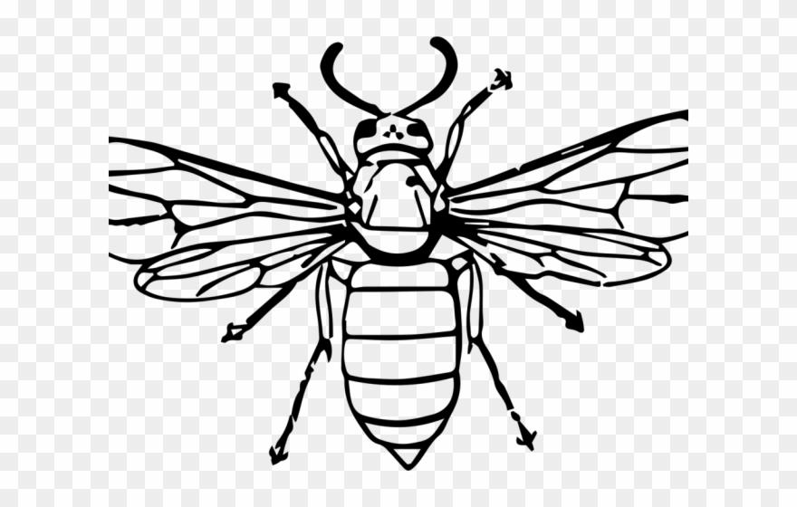 Black and white hornet clipart svg black and white stock Hornet Clipart Drawn - Drawing Of A Wasp - Png Download (#3659147 ... svg black and white stock