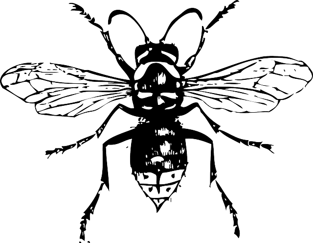 Black and white hornet clipart vector stock Free Image on Pixabay - Hornet, Bee, Insect   insects   Insect ... vector stock